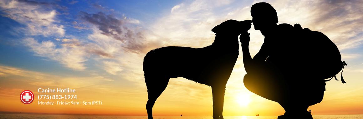 dogcancer-banner3